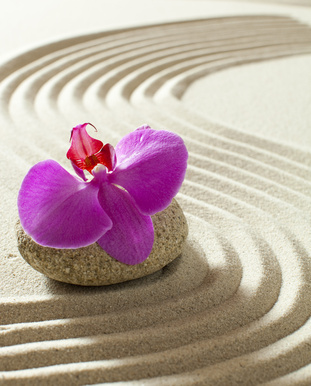 zen orchid still-life